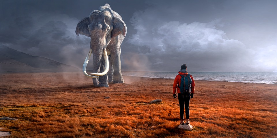 sueño con elefante