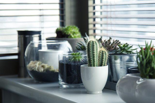 ¿Es malo dormir con plantas en el dormitorio?